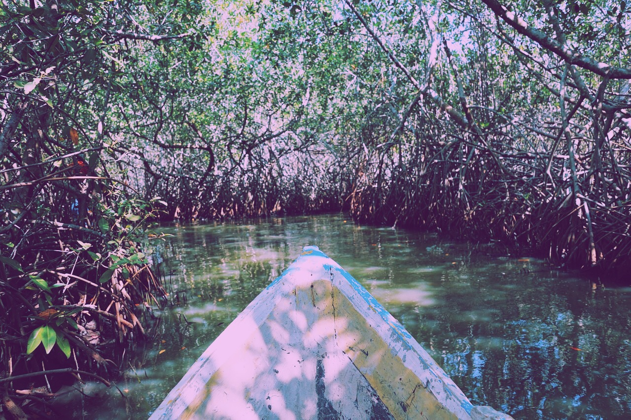 Things to do in Nusa Lembongan Mangrove