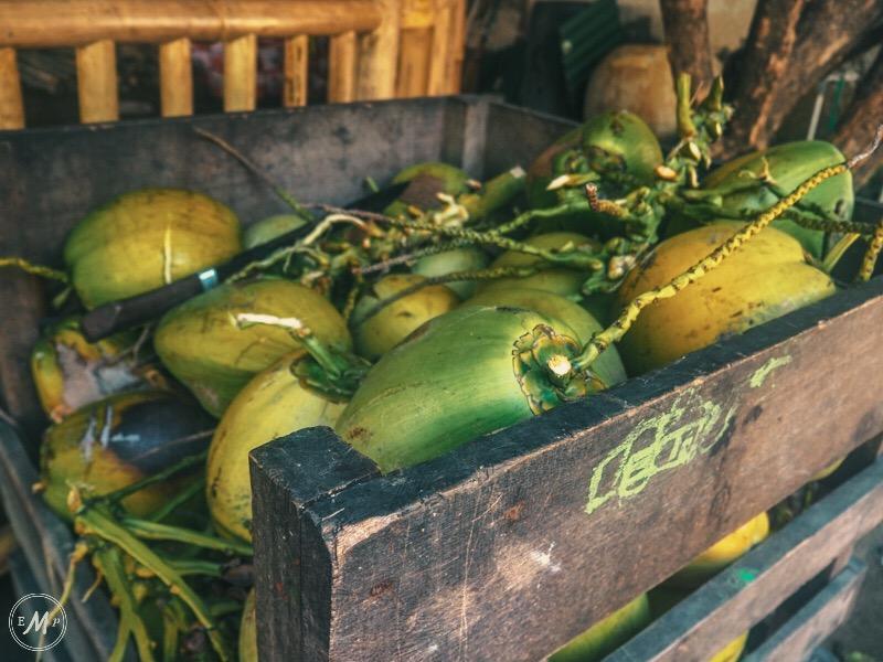 Gili Trawangan Itinerary coconuts