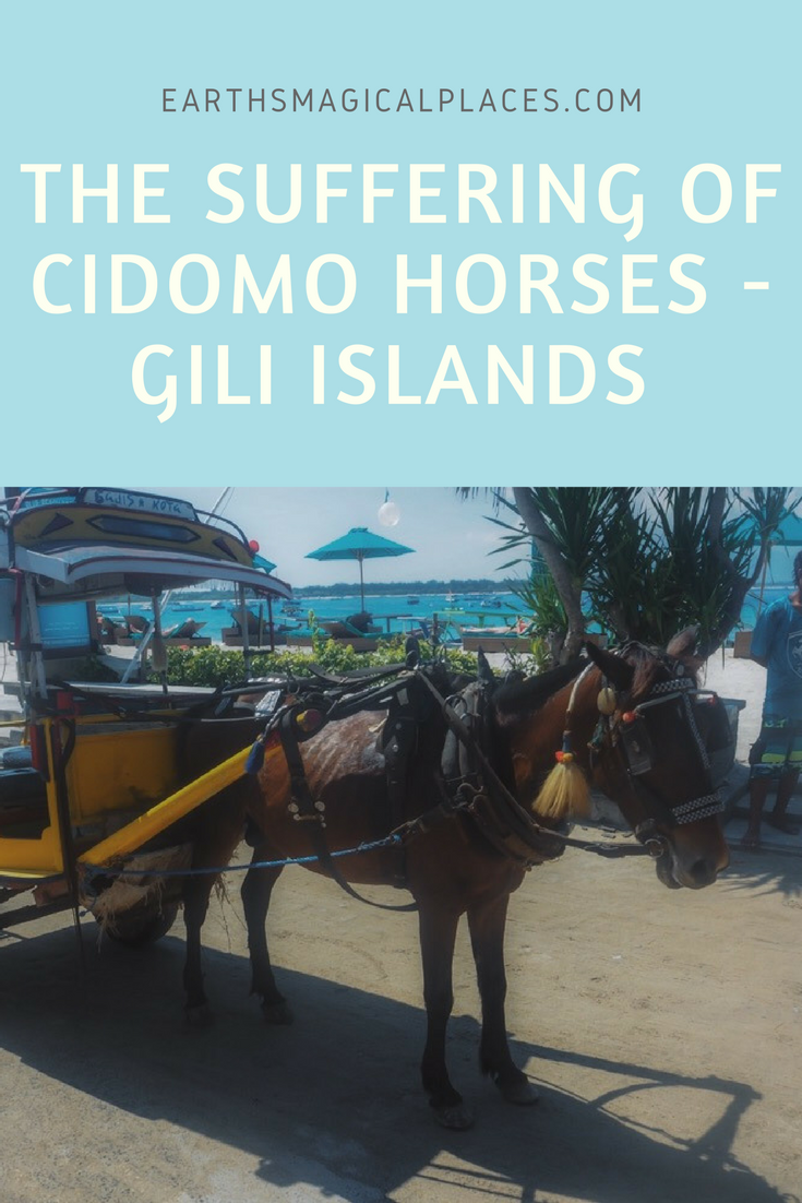 Cidomo Horses Suffering - The Price Of Tourism On The Gili Island: the Gili Islands of Indonesia are located off the coast of Lombok, near to Bali. Known as a paradise for snorkelling, beaches and famous swings, the islands (made up of Gili Air, Meno and Trawangan) have a dark secret. The suffering of the beautiful Cidomo Horses.