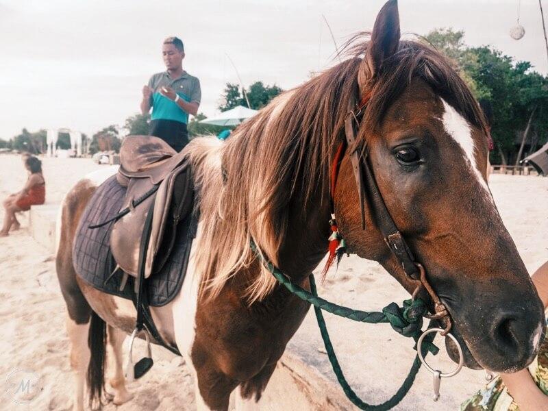 Gili Cidomo Horses