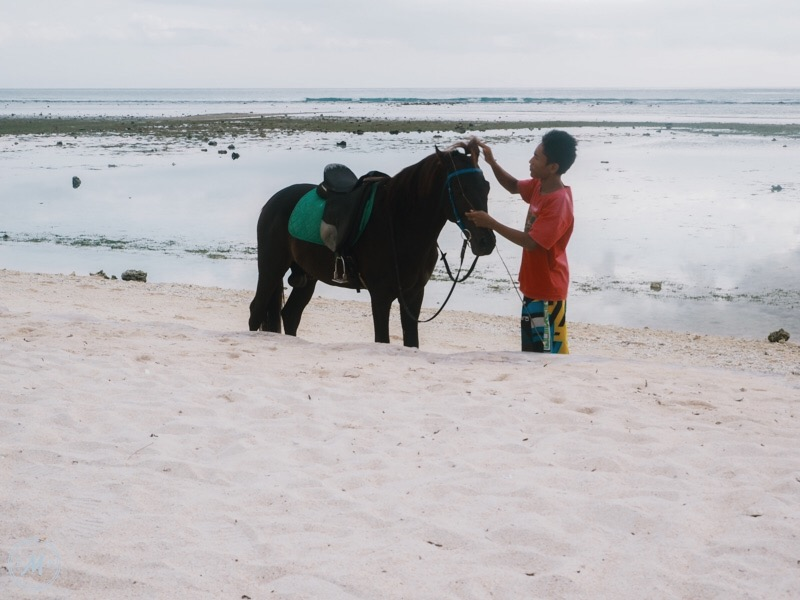 Suffering of Cidomo Horse on the Gili Islands - one kind owner bathing his horse