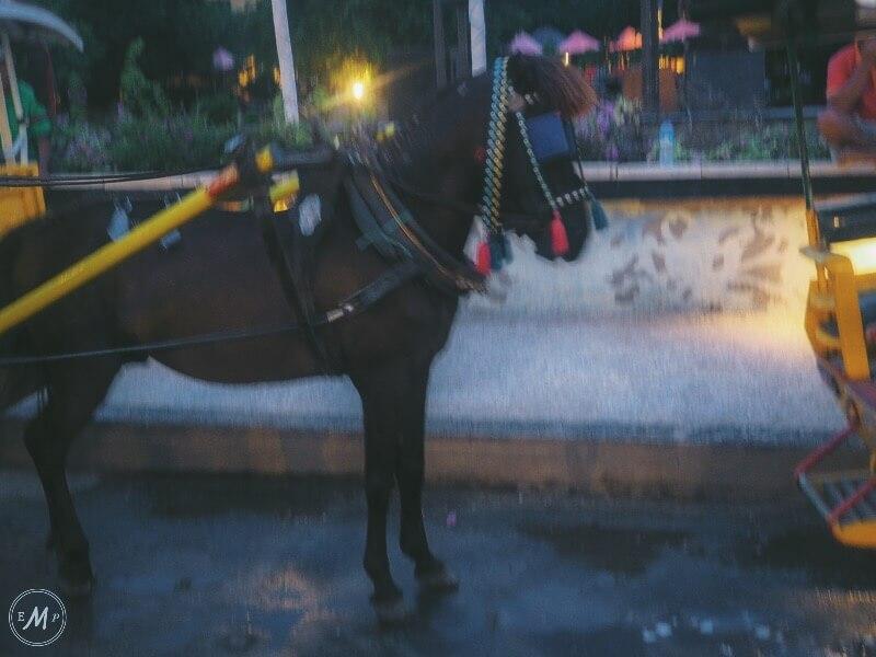 Gili Horses abuse