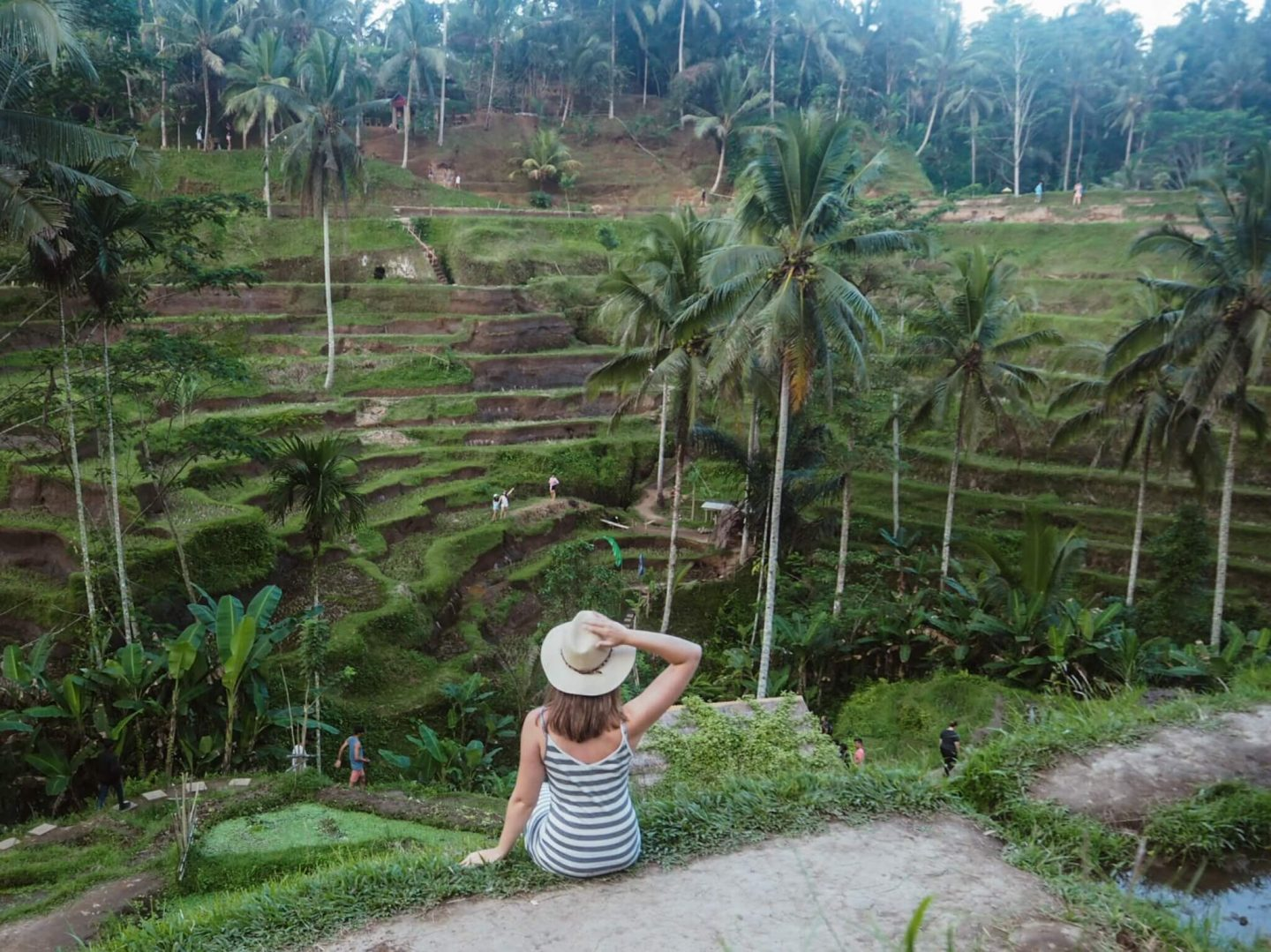 Tegalalang Rice Terraces (things to do in Ubud Bali)