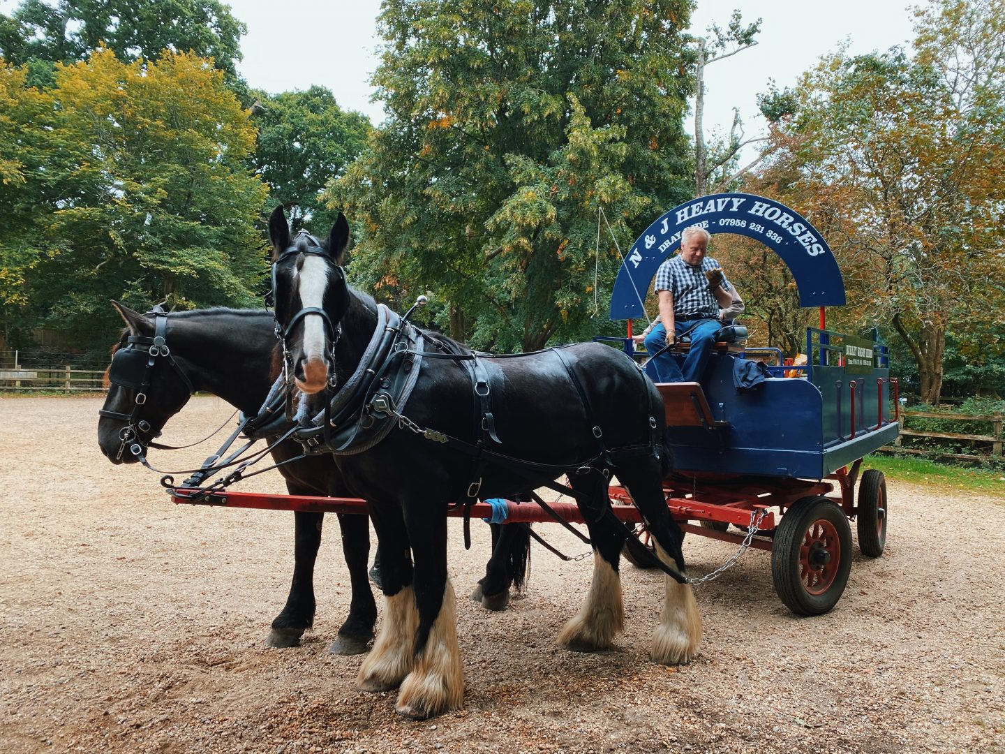Burley New Forest Wagon Ride