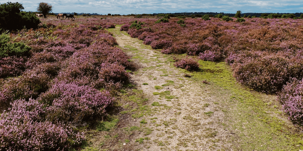 Top 10 things to do in the New Forest